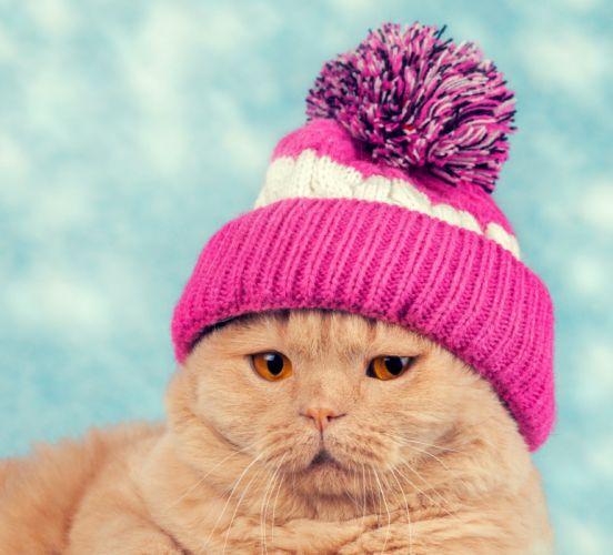 Cats Winter hat Snout Animals wallpaper