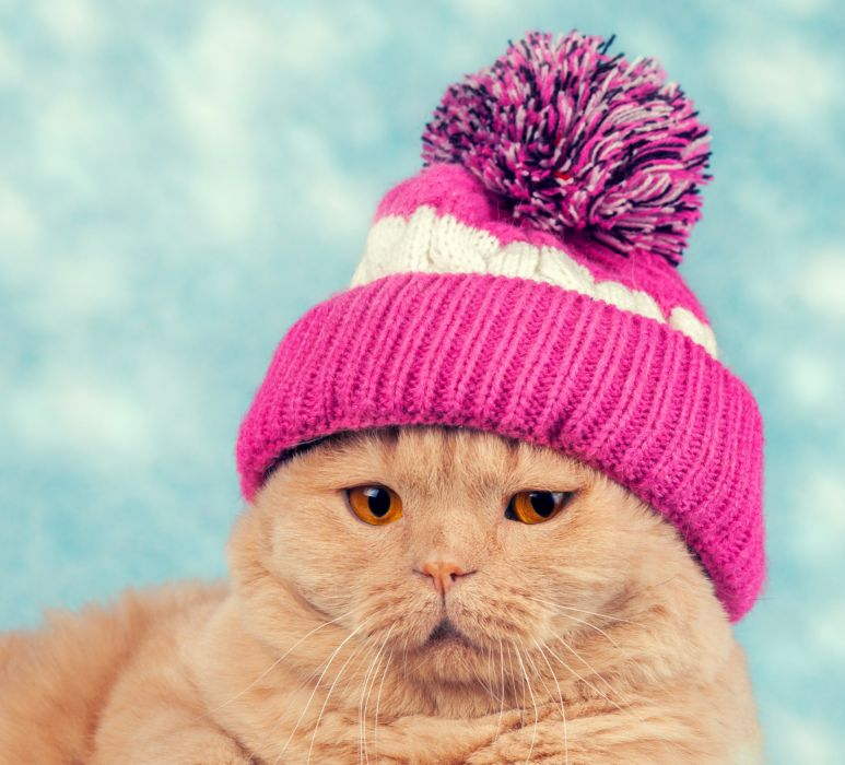 Cats Winter hat Snout Animals wallpaper