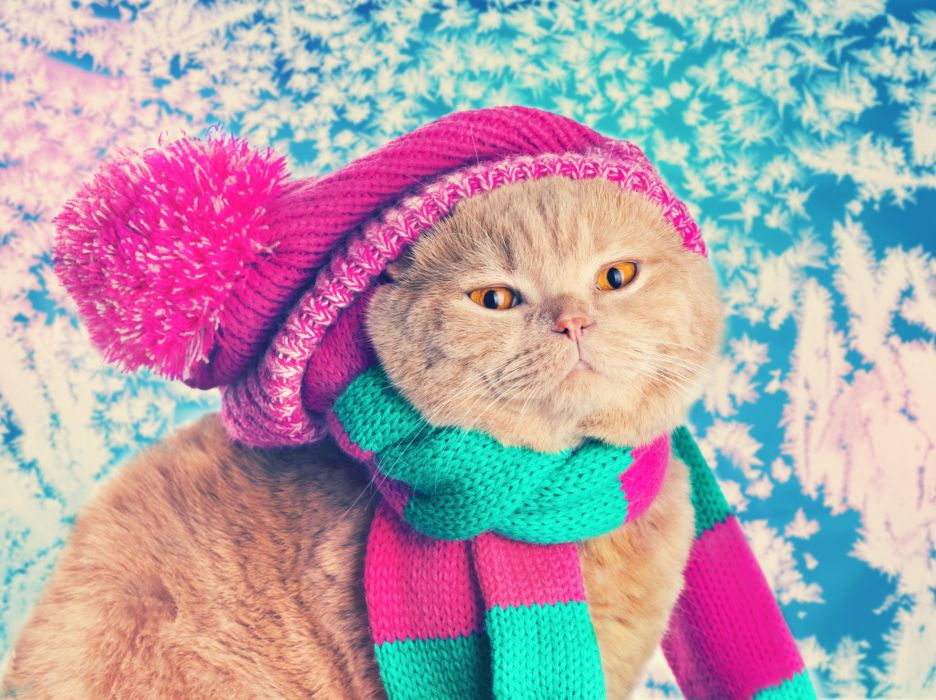 Cats Winter hat Glance Animals wallpaper