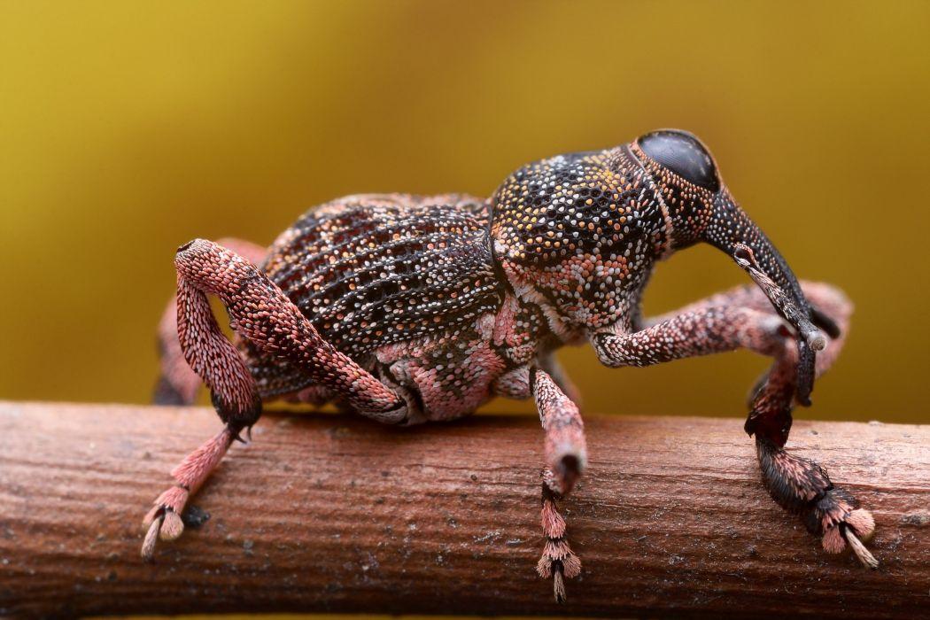 Closeup Bugs Animals wallpaper