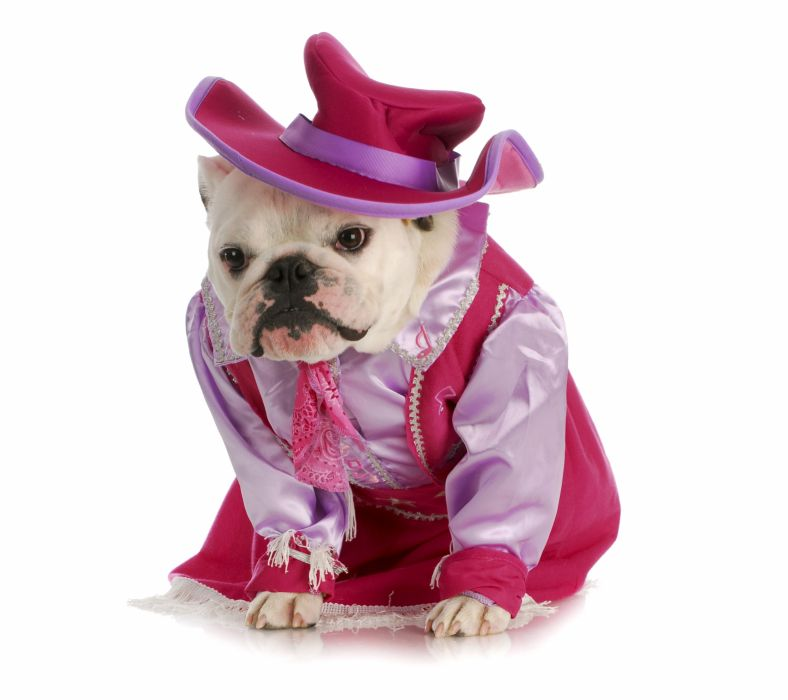 Dogs Bulldog Uniform Hat Animals wallpaper