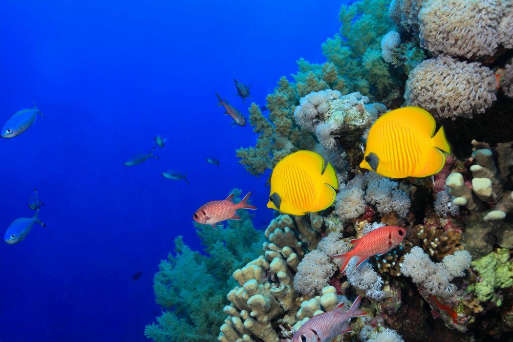 Underwater world Fish Corals Animals wallpaper