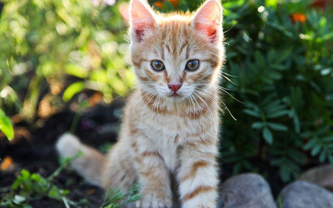 beauty cute amazing animal Cat in Garden wallpaper