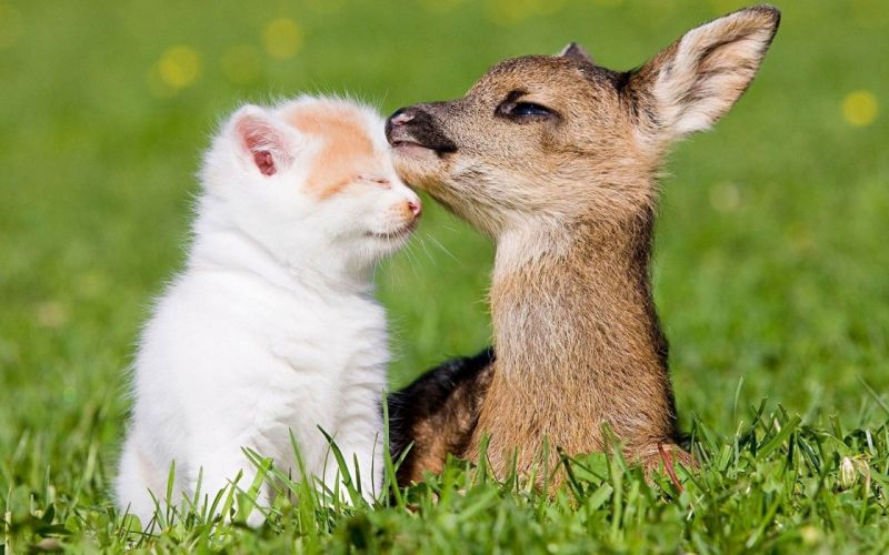 beauty cute amazing animal Deer Child and Cat in Farm wallpaper