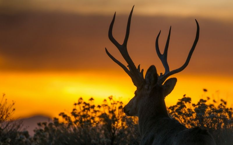 beauty cute amazing animal Deer During Sunset wallpaper