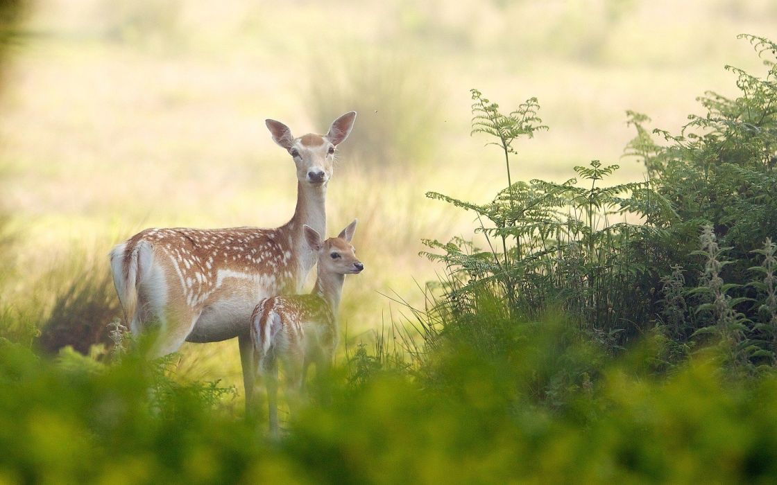 beauty cute amazing animal Deer Mother and Child Standing Together wallpaper