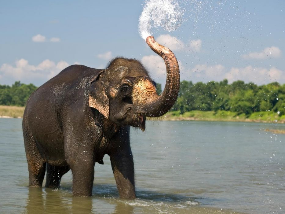 beauty cute amazing animal Elephant in Water wallpaper