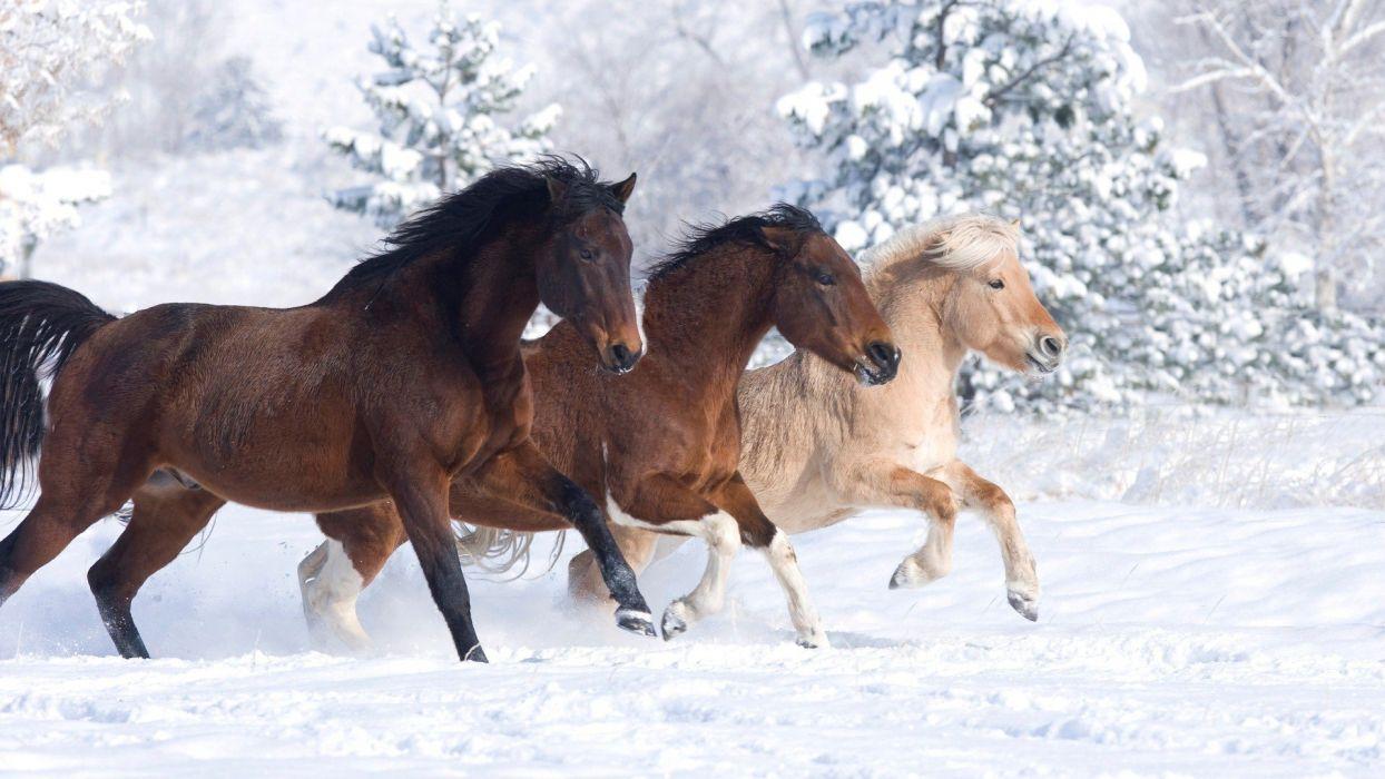 beauty cute amazing animal Horse in Snowy Weather wallpaper