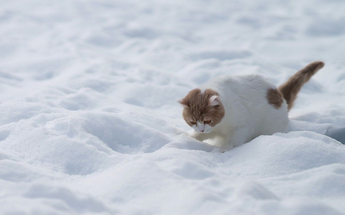 beauty cute amazing animal Kitten in Snowy Weather Animal wallpaper