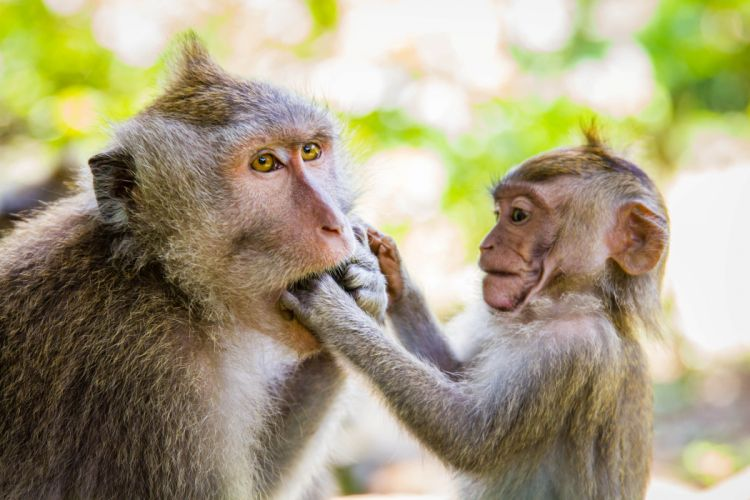 beauty cute amazing animal Monkey with Her Baby wallpaper