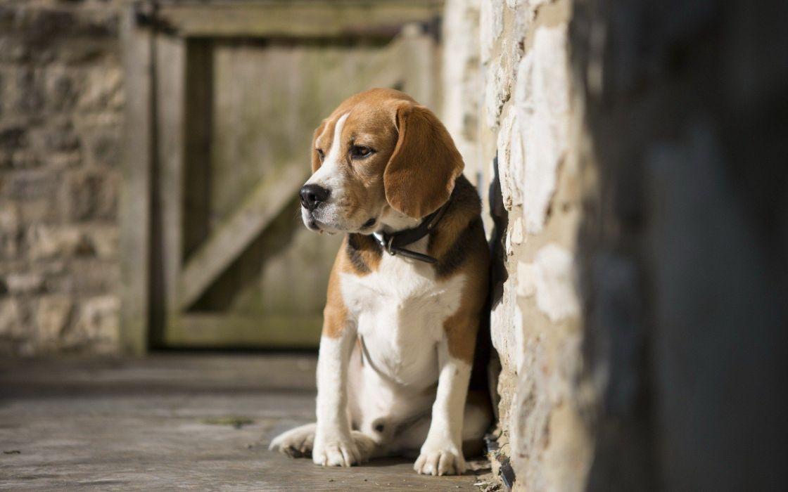 beauty cute amazing animal Pets Animal Doggy wallpaper