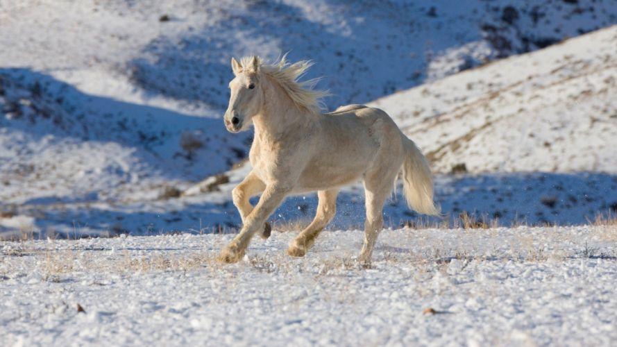 beauty cute amazing animal White Horse Running wallpaper