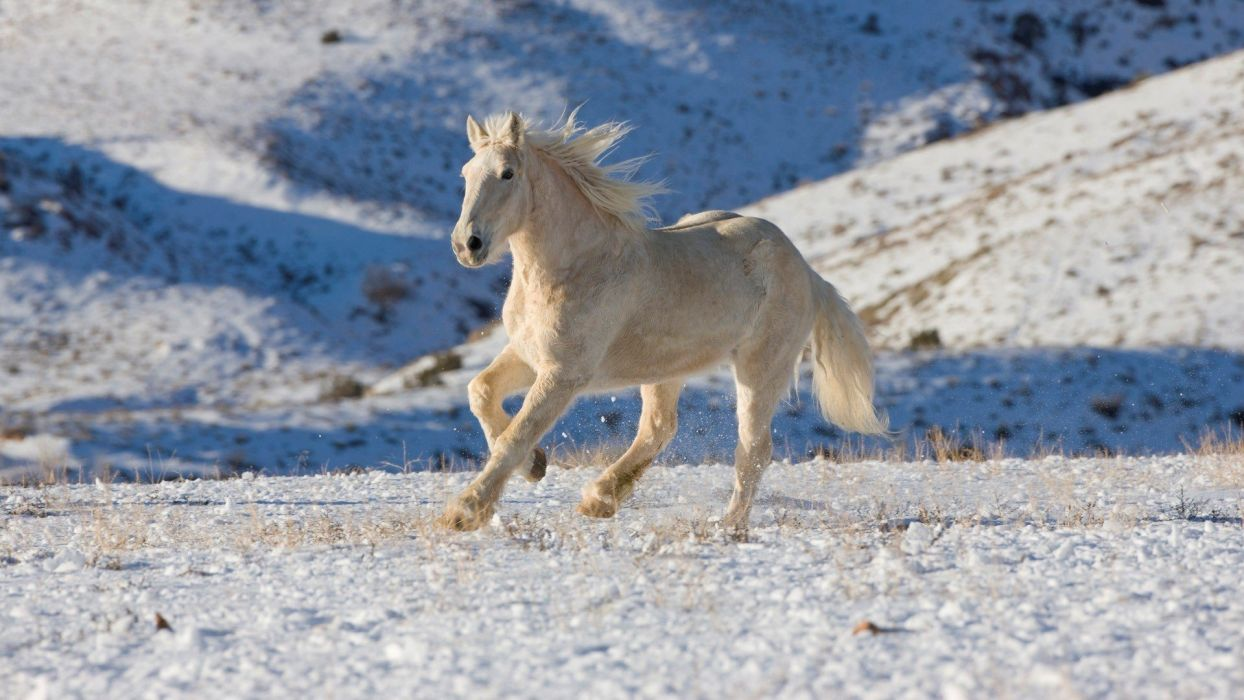 beauty cute amazing animal White Horse Running wallpaper