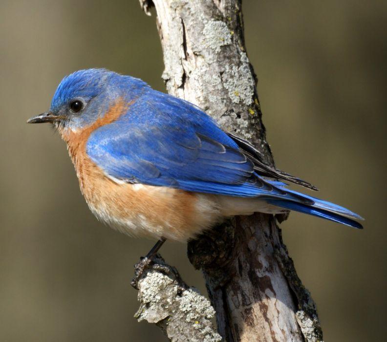 bird birds animal nature wallpaper