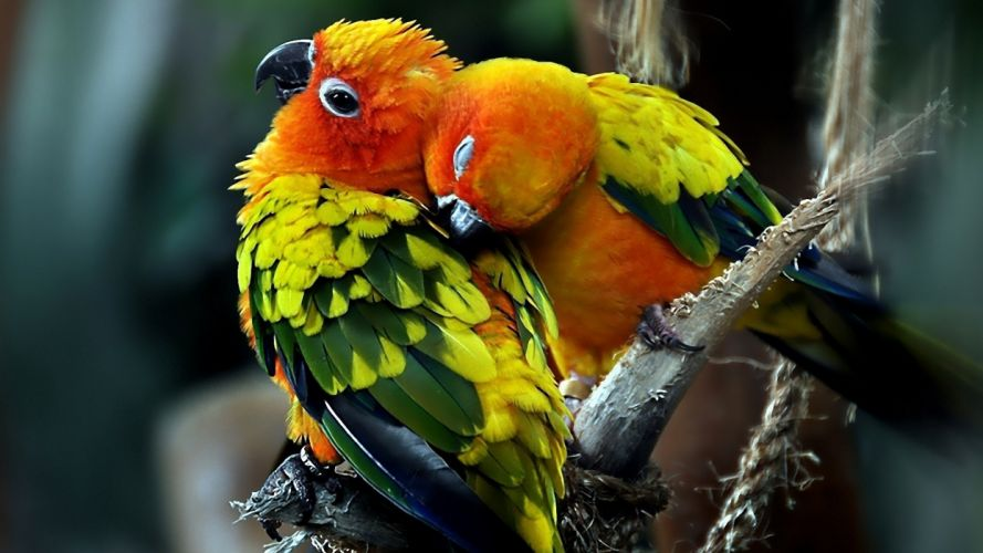 bird birds animal nature wallpaper