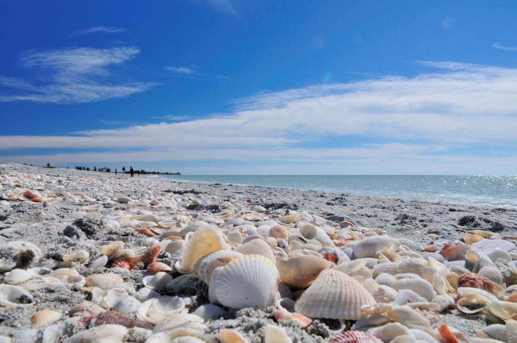 playa almejas mar naturaleza wallpaper