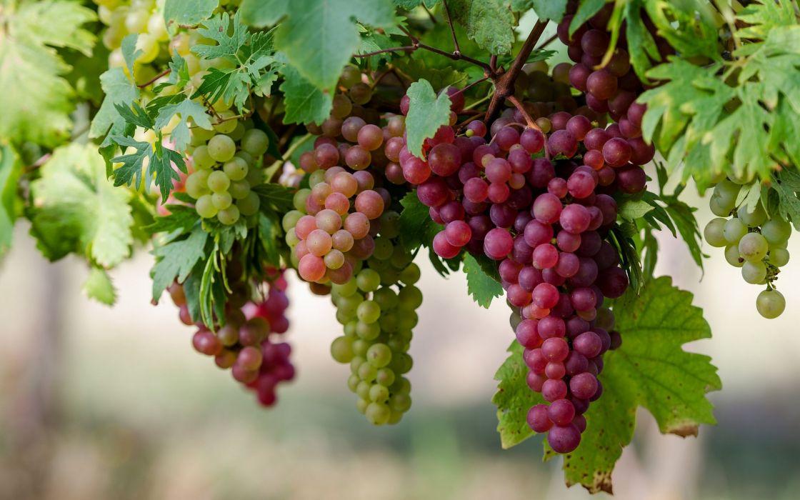 racirmos uva negra frutas naturaleza wallpaper