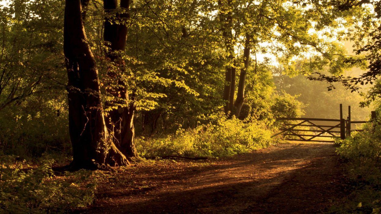 paisaje bosque naturaleza arboles vallado wallpaper