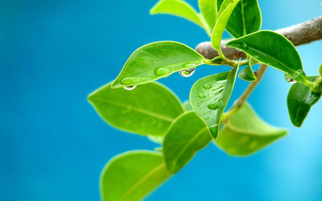 hojas verde arbol naturaleza cielo wallpaper