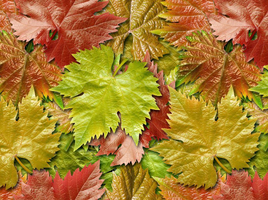 hojas caidas naturaleza verdes rojas wallpaper