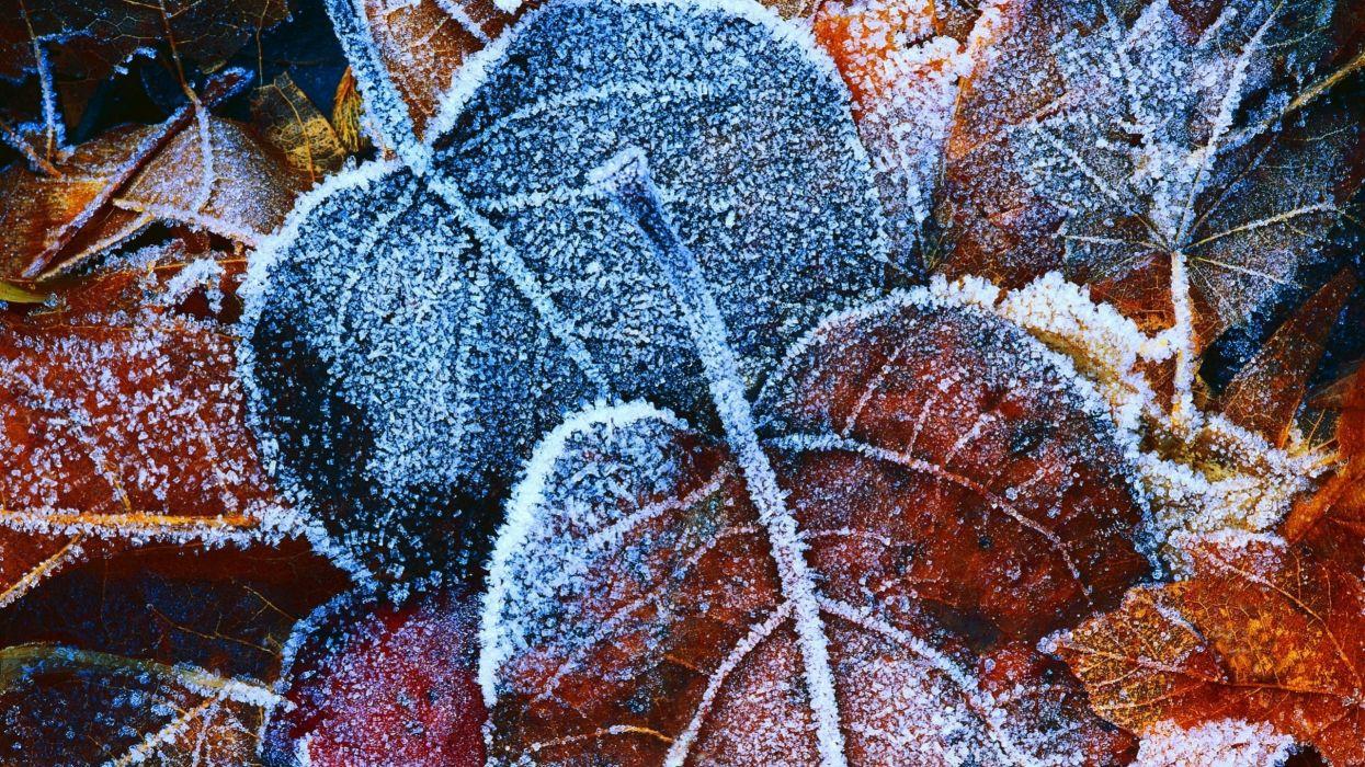 hojas caidas marrones naturaleza wallpaper