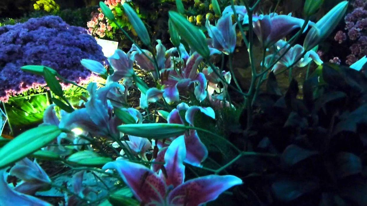 planta flores naturaleza wallpaper
