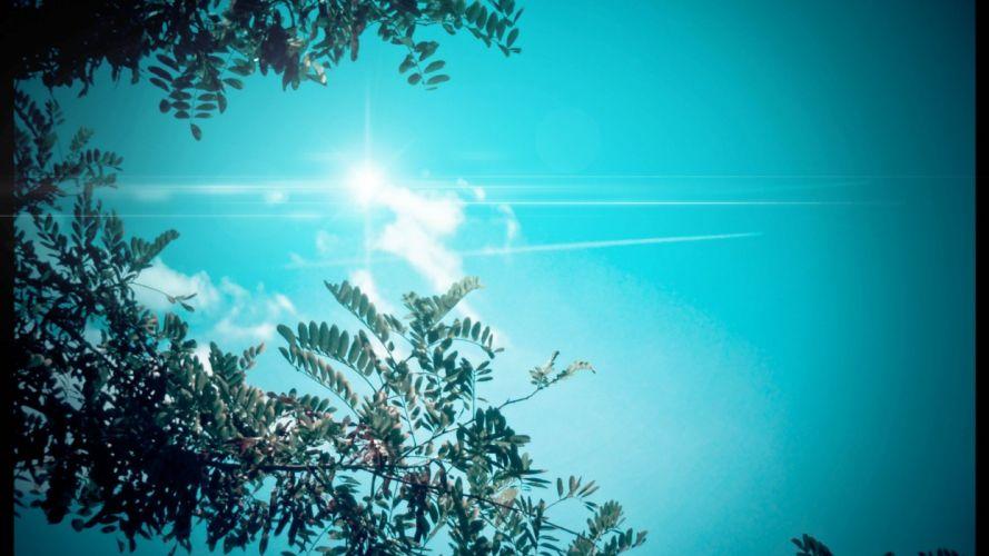 cielo azul arboles naturaleza wallpaper
