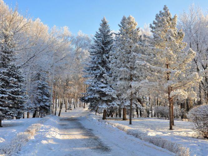 abetos arboles nieve invierno naturaleza wallpaper