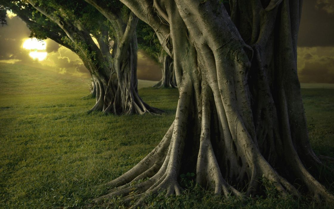 arboles troncos bosque naturaleza wallpaper