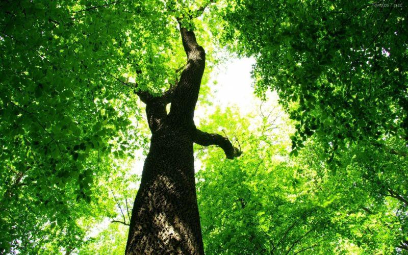 arboles naturaleza ramas hojas wallpaper