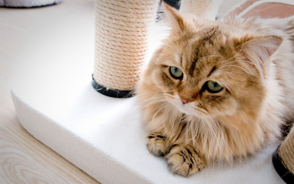 kitten cute animal cat wallpaper