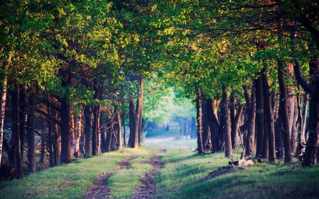 naturaleza arboles camino hierbas wallpaper