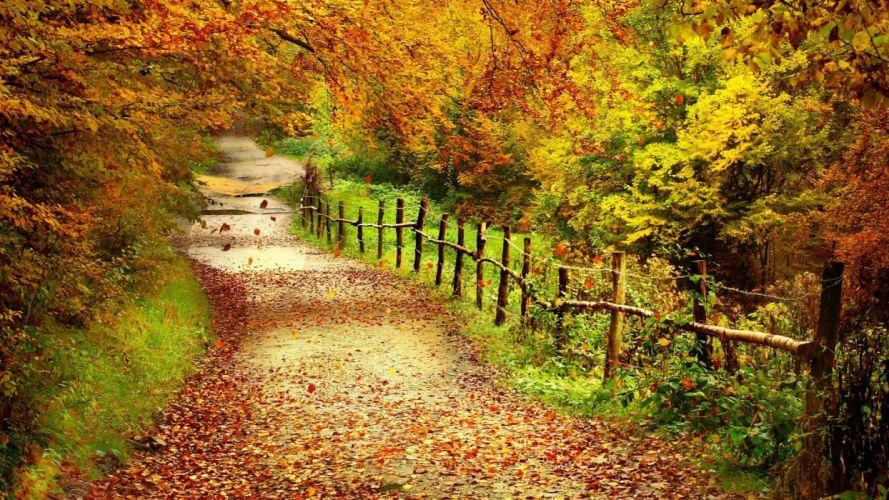 naturaleza bosque camino vallado arboles wallpaper
