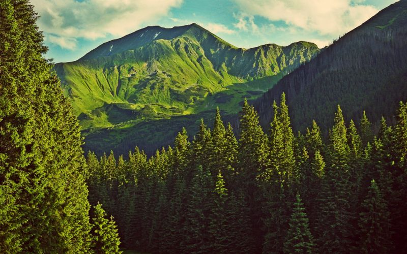 paisajes bosque arboles naturaleza montaA wallpaper