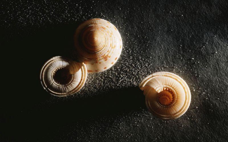 amazing beauty of nature seashell wallpaper