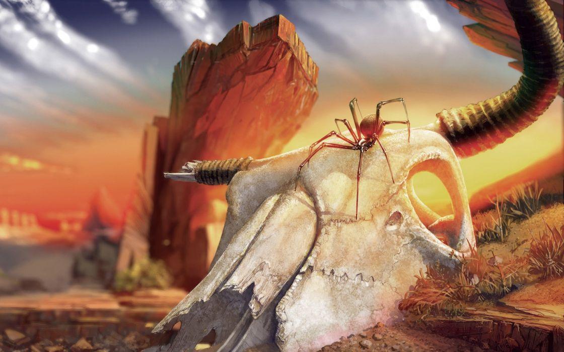 fantasy 2d spider skull animal wallpaper