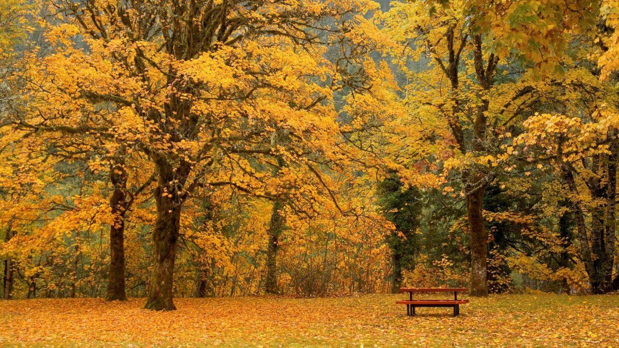 Autumn Bench amazing landscape nature beauty wallpaper