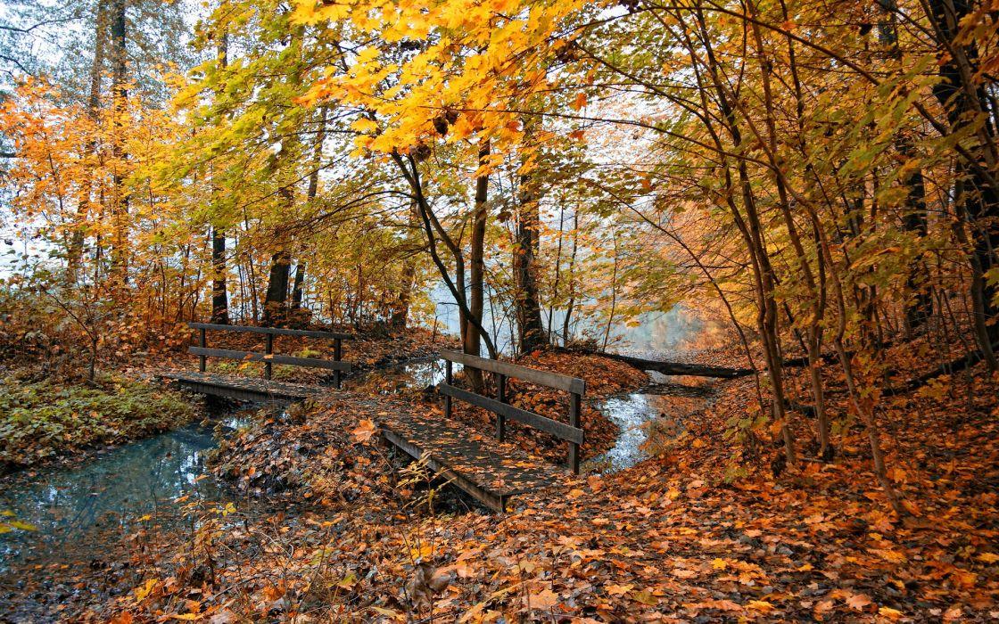 Nature Tree Autumn Photography Leaves amazing landscape beauty wallpaper