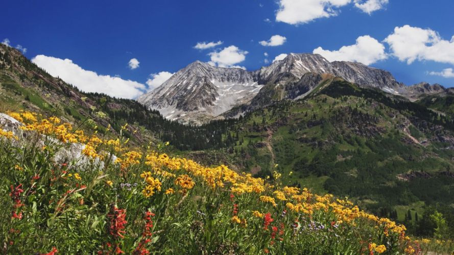 amazing landscape nature beauty Spring Wildflowers in Alpine Meadow at Lead King Basin clouds wallpaper