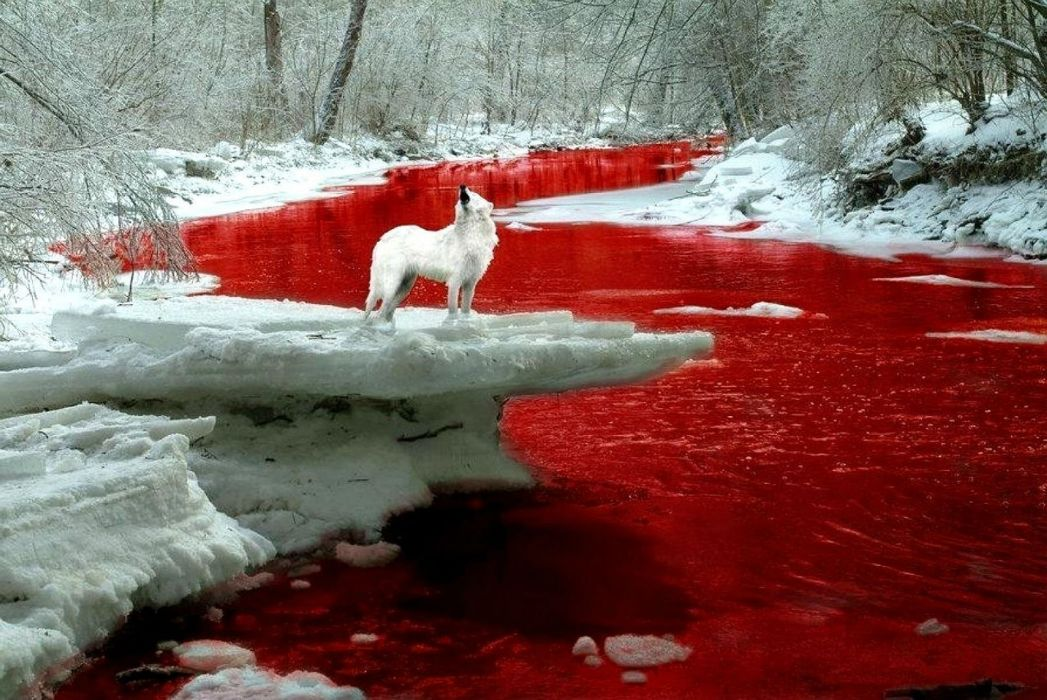 BLOOD River dark manipulation photoshop selective coloring nature landscape river psychedelic horror red fantasy wolf wolves wallpaper