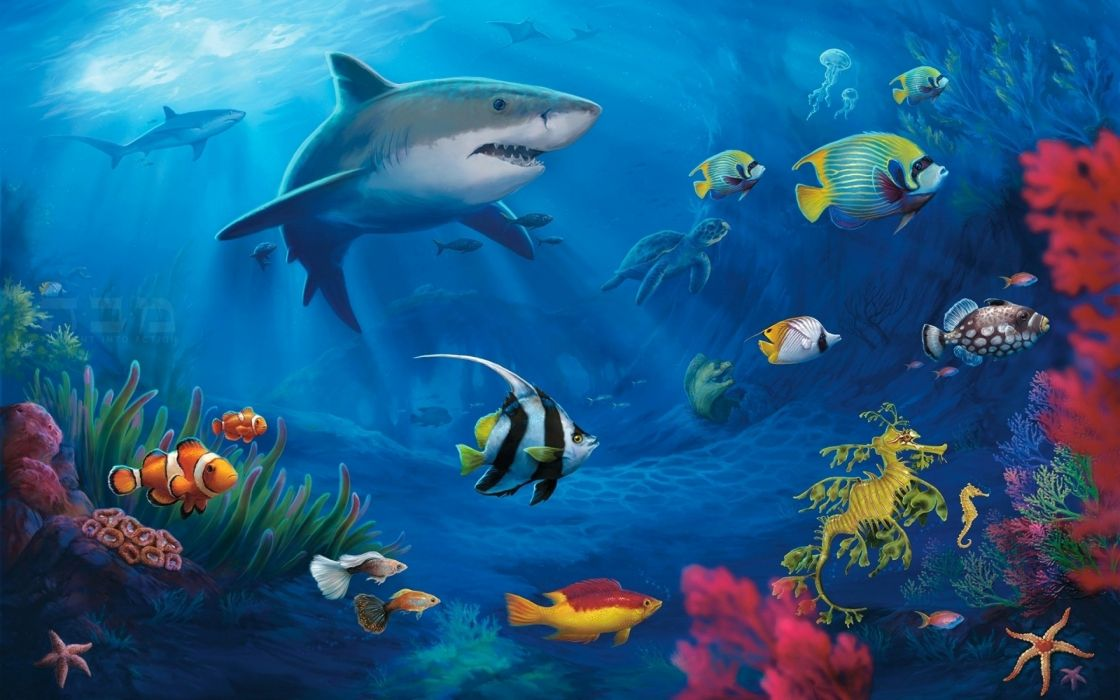 Fish Fishes Underwater Sealife Ocean Sea Water Wallpaper 2560x1600 918456 Wallpaperup