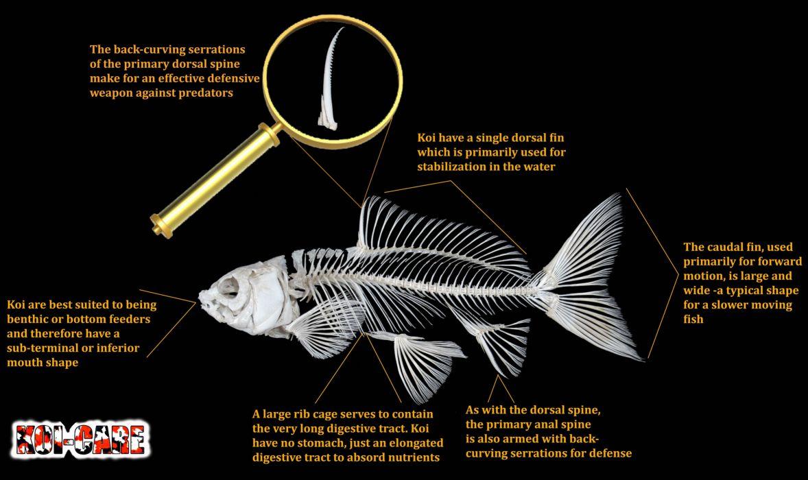 FISH fishes underwater sealife ocean sea water wallpaper