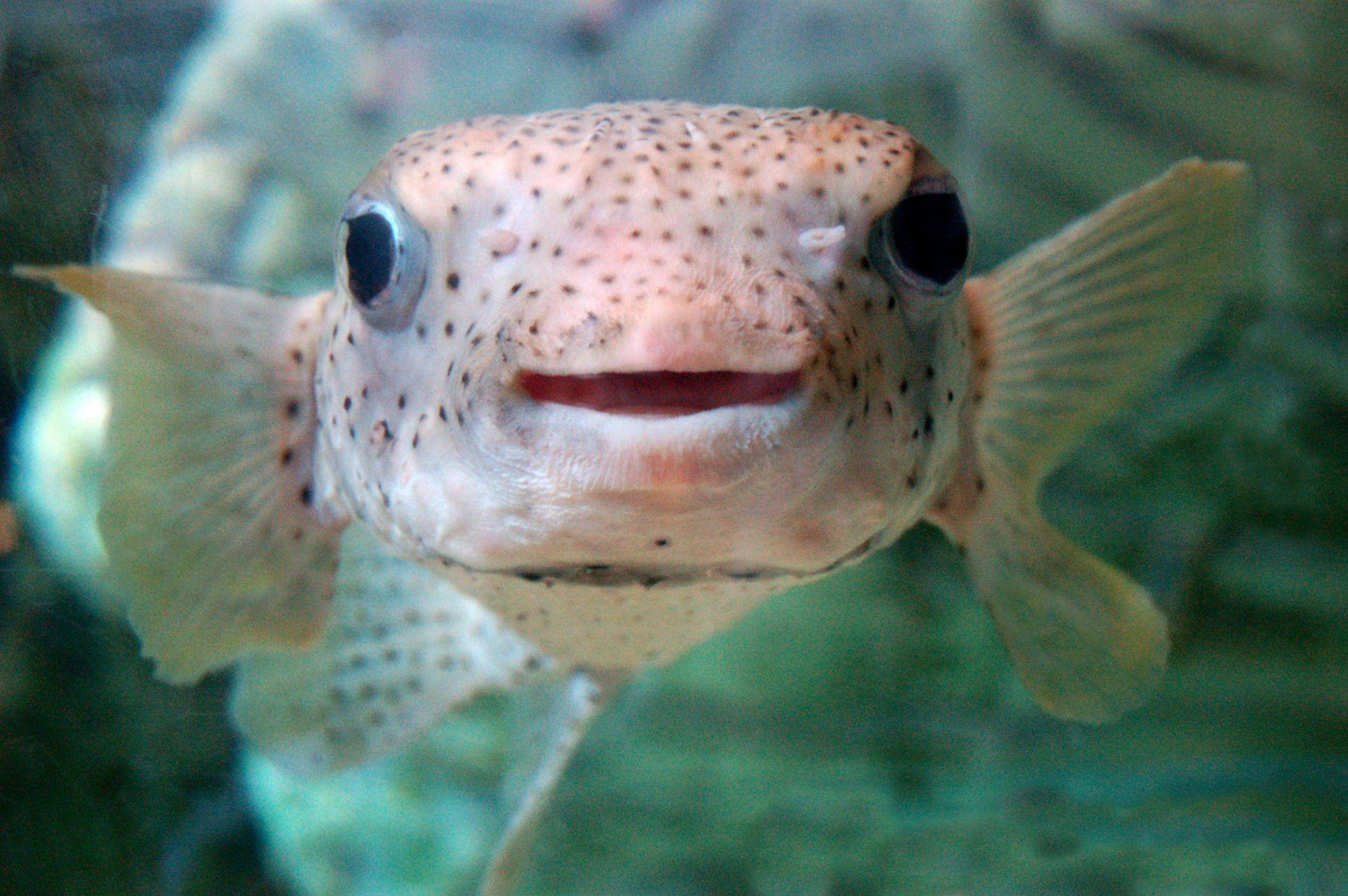 Картинки с прикольными рыбами