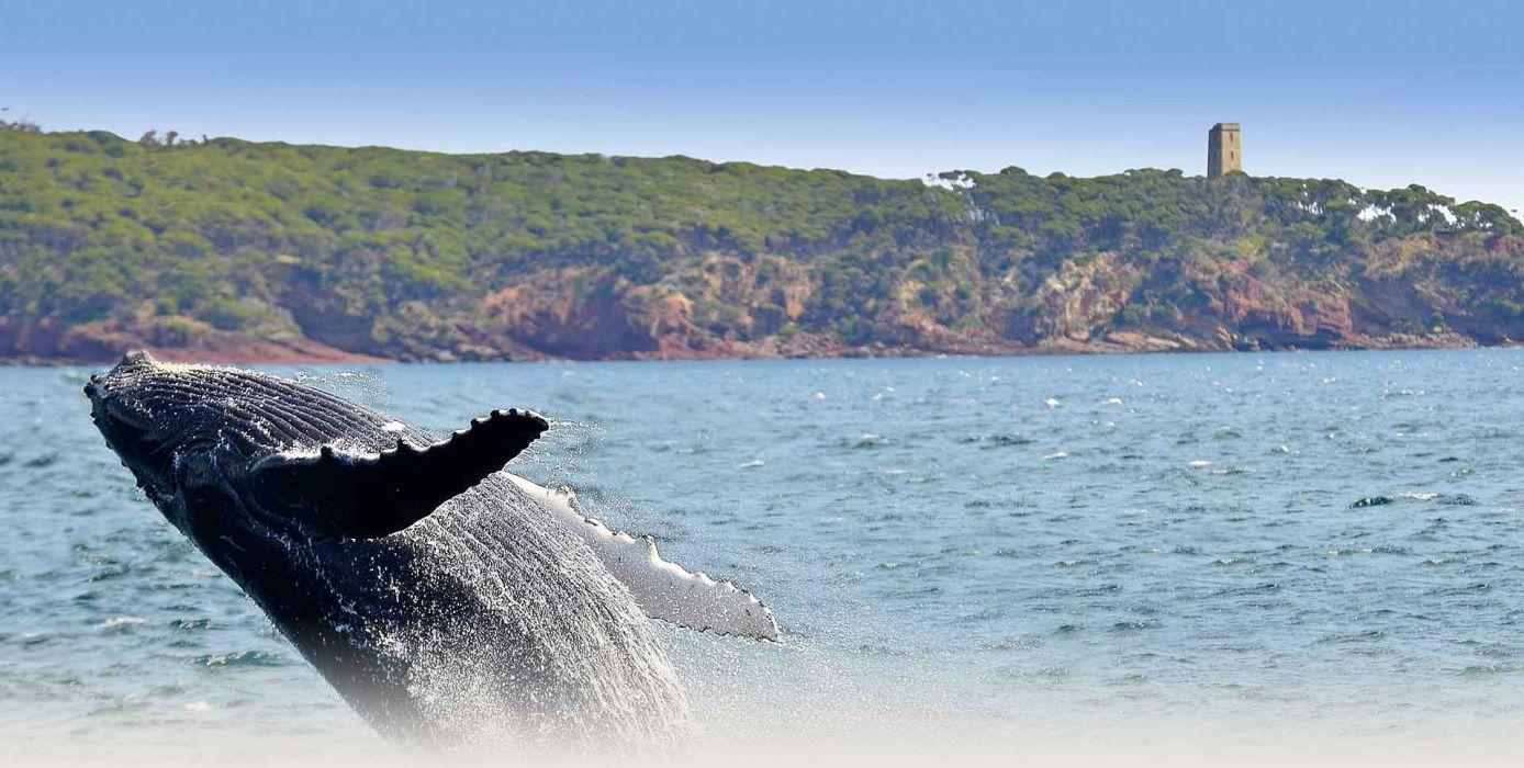 WHALE whales fish underwater ocean sea sealife wallpaper