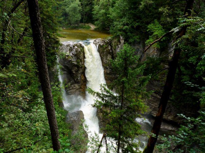 forest waterfall rocks trees wallpaper