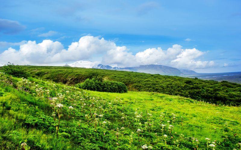 grass flowers field greens summer hills clouds wallpaper