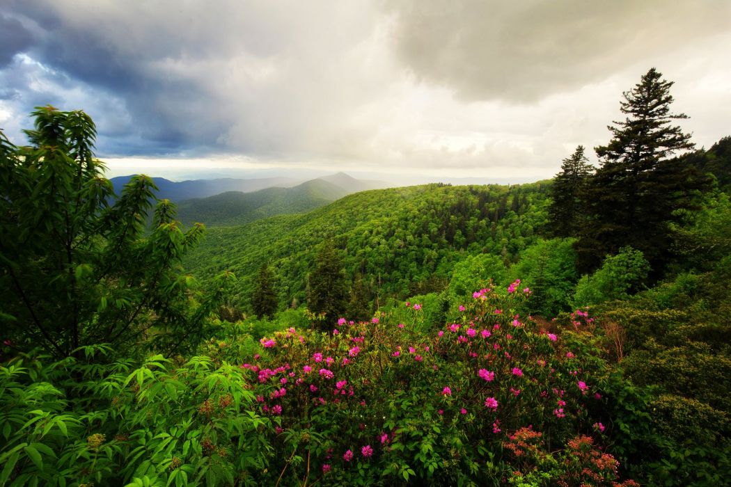 Mountains trees forest bushes herbs flowers clouds wallpaper