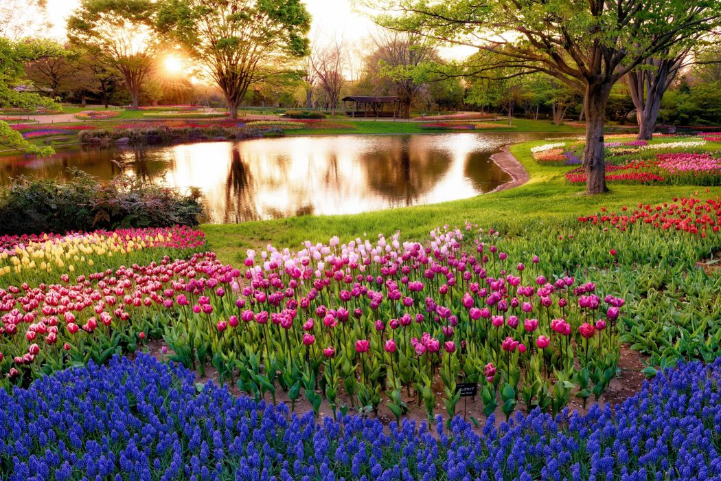 park trees pond gazebo sun grass greens flowers tulips colorful hyacinths wallpaper