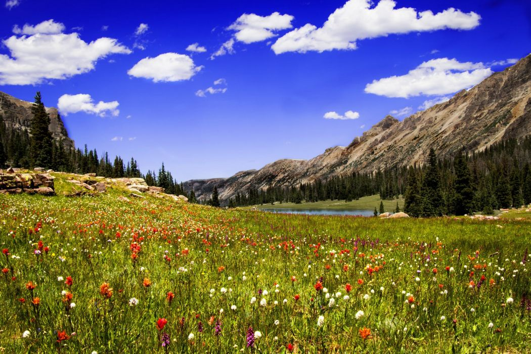clouds mountains lake meadow grass flowers wallpaper