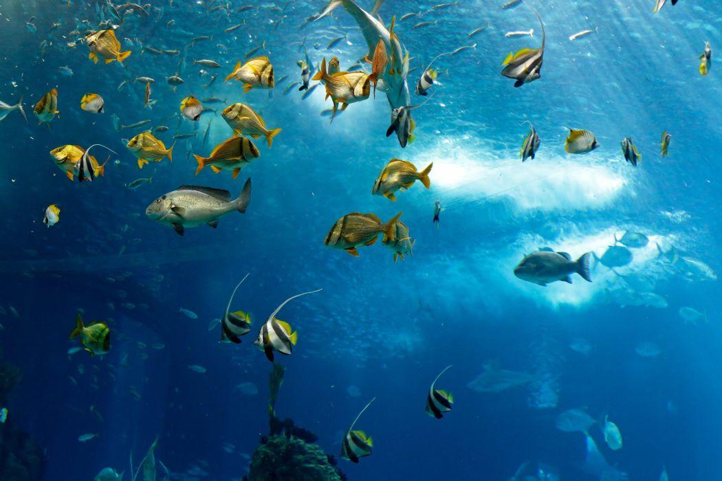 fish underwater sea ocean fish underwater sea ocean wallpaper